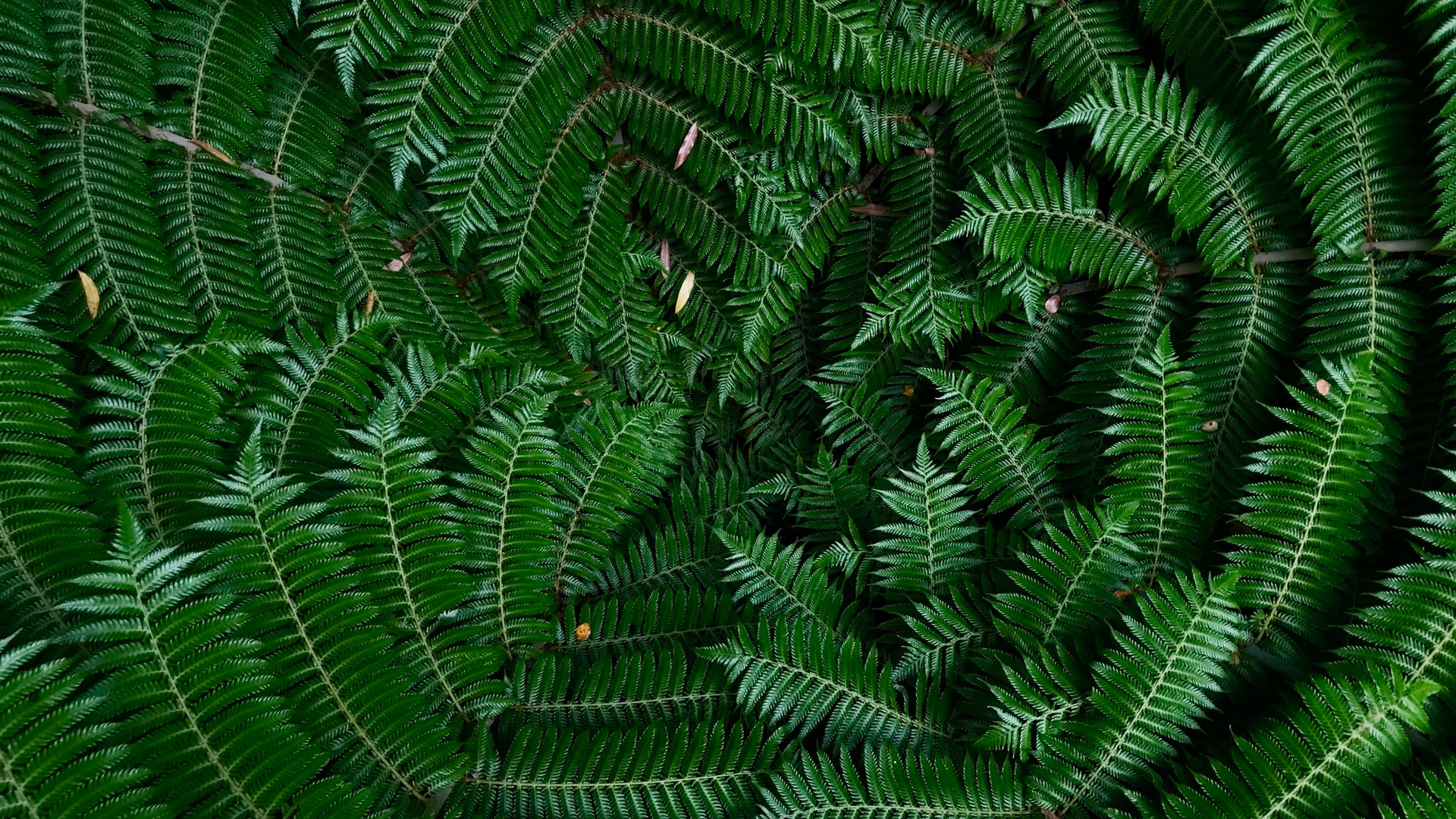 photo of fern branches
